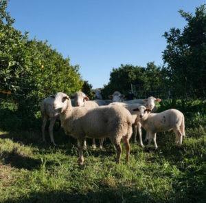 web moutons