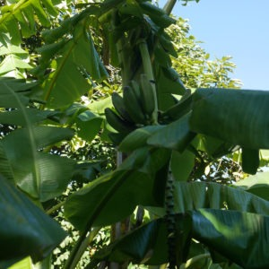 web pablo bananier